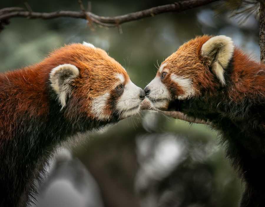 Czego zwierzęta mogą nauczyć nas o budowaniu związku?