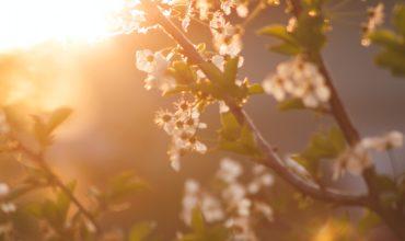 Wiosna tuż-tuż, a wraz z nią wiosenne przesilenie. Jak sobie z nim radzić?